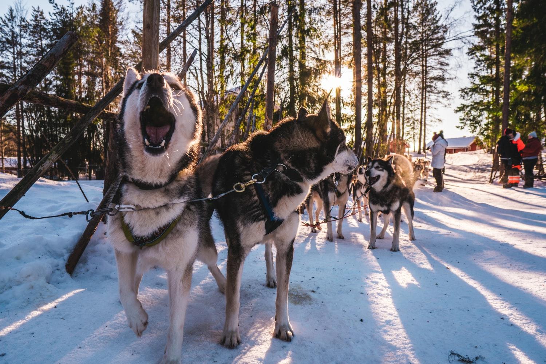 chiens de traineaux photo-1553459706-c58adcf03986
